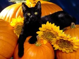 Playful-Pets-halloween