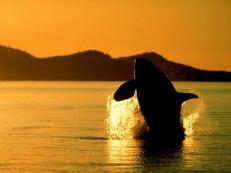 Ballenas atardecer2