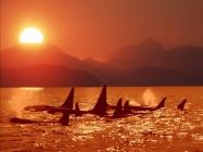 ballenas fondo del mar