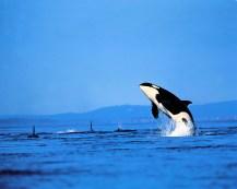 Ballenas mar3