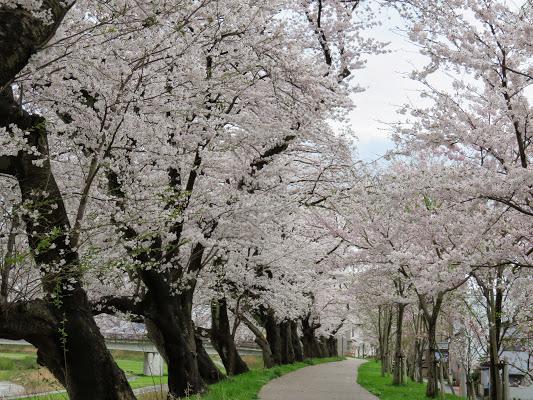 Flores japón7