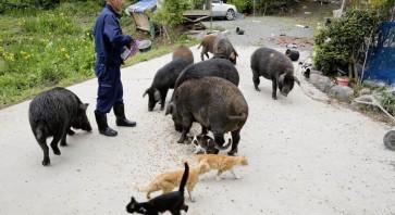fukushima-radioactive-disaster-abandoned-animal-guardian-naoto-matsumura