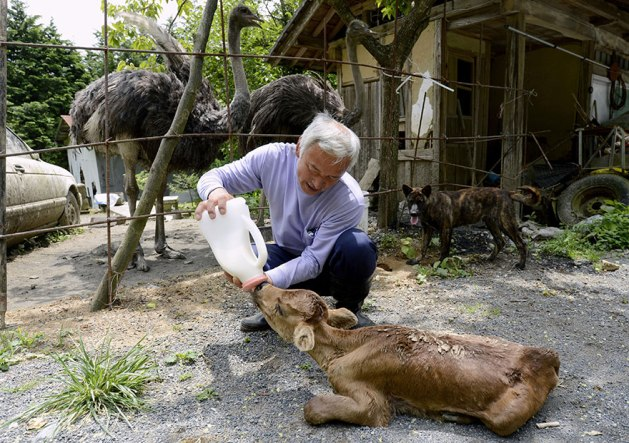 guardian-fukushima-abandoned-animals-naoto-matsumura