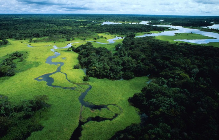 Aerial view of flooded forest during rainy season with floating plants, Rio Negro Forest Reserve, Amazonas, Brazil