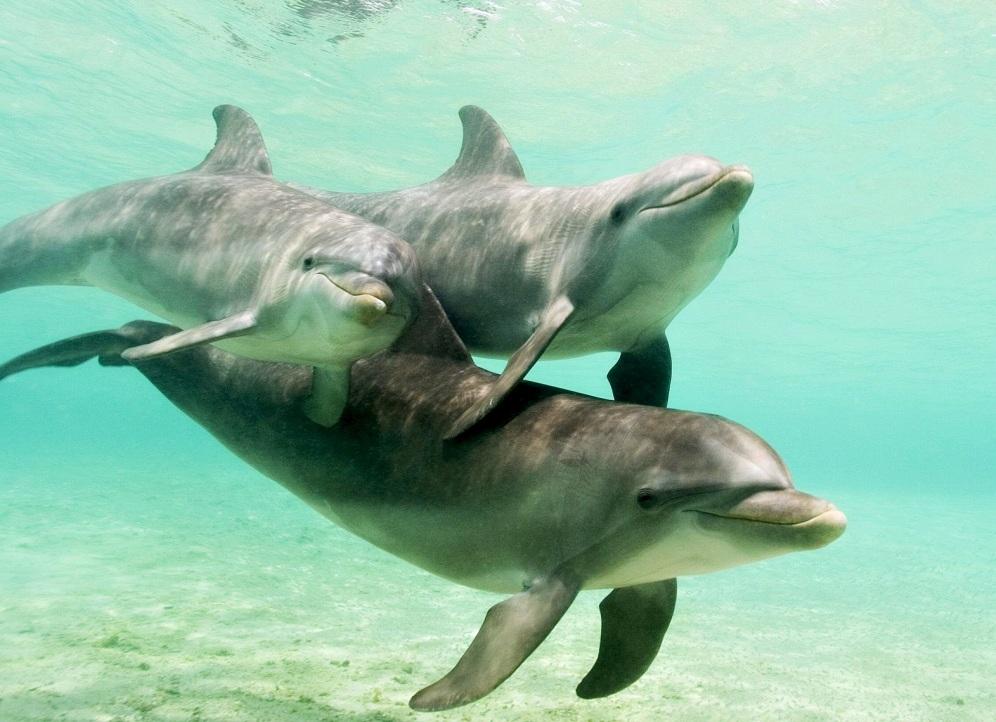 contaminantes de los mares Delfines