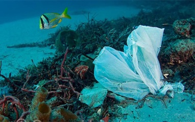 Garbage consisting of plastic bags, fishing line and litter scattered along the bottom of Palm Beach County reefs and intracoastal waterways. Florida, USA